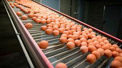 Η Ολλανδία γνώριζε για τα μολυσμένα αυγά από το Νοέμβριο του