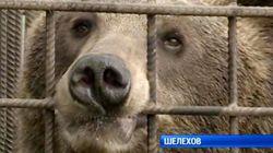 Αρκούδα δαγκώνει μεθυσμένο άνδρα, όταν αυτός προσπαθεί να της δώσει γάλα στο κλουβί