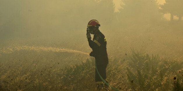 Ηλεία: Πυρκαγιά σε δασική έκταση στην περιοχή Κρυονέρι