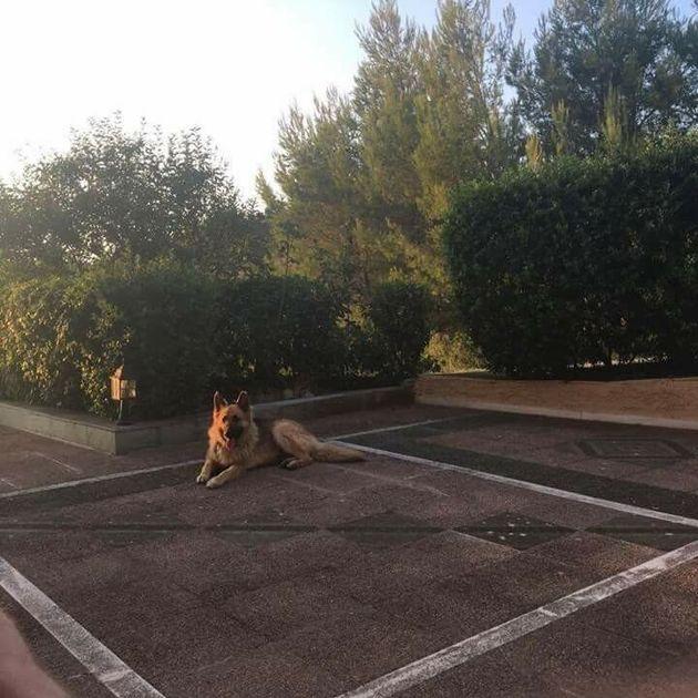 Εθελοντές έσωσαν σκυλιά από την πύρινη λαίλαπα. «Ήταν δεμένα και
