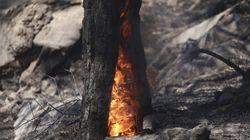 Μεγάλη δασική πυρκαγιά στο Δίλοφο