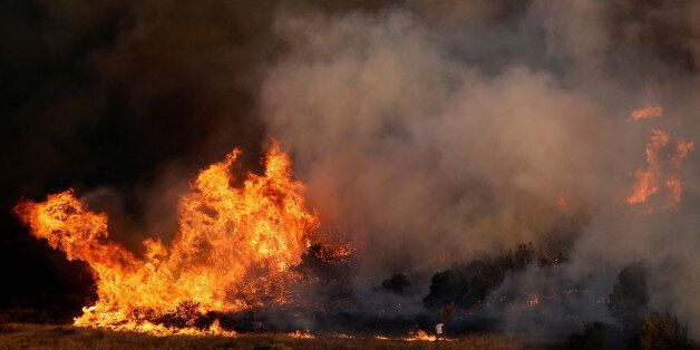A local tries to extinguish a fire with a tree branch as a wildfire burns in the area of Kalyvia, near...
