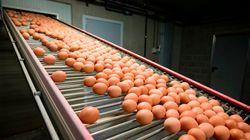ΕΕ-Μολυσμένα αυγά: Σύσκεψη για τη διαχείριση της κρίσης θα συγκαλέσει η