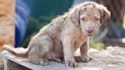Τώρα μπορείτε να υιοθετήσετε ένα αδέσποτο ζώο που τραυματίστηκε στις φωτιές της Αν.