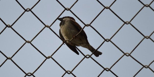 sparrow over barbed wire at Refugee