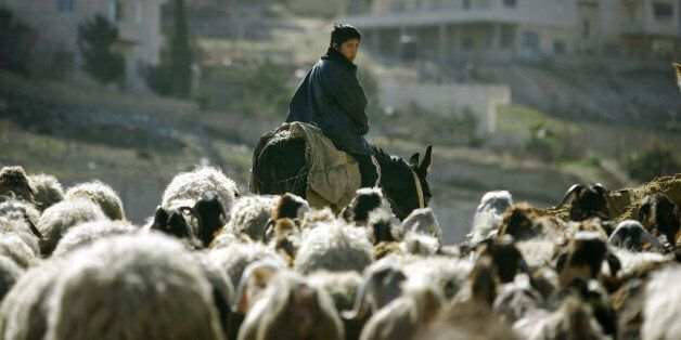 A Palestinian boy rides a donkey as he herds sheep in Al Zaeim, on the edge of Jerusalem, January 26,...