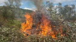Παραμένουν σε εξέλιξη οι φωτιές σε Σπέτσες και