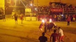 Βίντεο: Φρικτός θάνατος ταύρου σε ισπανική φιέστα- του έβαλαν φωτιά στα κέρατα και μπήκε σε