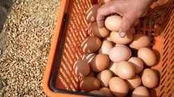Διατροφικό σκάνδαλο με εκατομμύρια μολυσμένα αυγά στην Ευρώπη. Σε ποιες χώρες ανακαλούνται