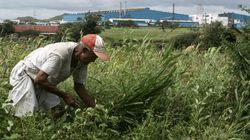 60.000 Iνδοί αγρότες αυτοκτόνησαν λόγω της κλιματικής
