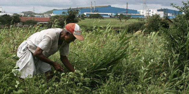MUMBAI, INDIA - SEPTEMBER 12, 2008: Agriculture Farmers Farmer Vithalrao Yelwade has only 2 acre farm...