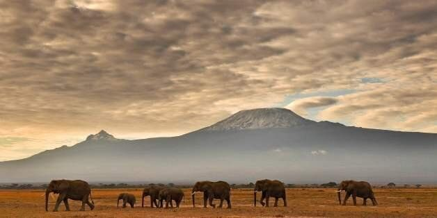 A herd of elephants walk in front of Mount Kilimanjaro in Amboseli National Park on November 3, 2016....
