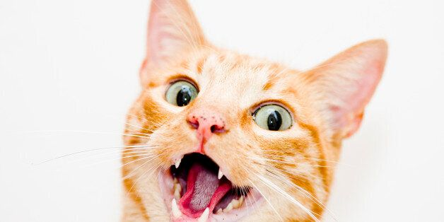 Γυναίκα έχασε τη ζωή της από δάγκωμα γάτας. Ή μήπως