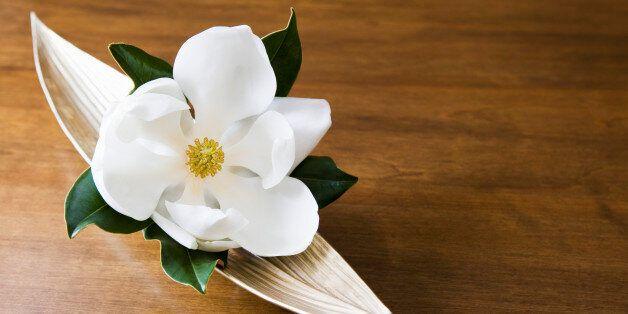 Οι επιστήμονες «ανακάλυψαν» το πρώτο λουλούδι που άνθισε ποτέ στη