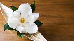 Αυτό είναι το πρώτο λουλούδι που άνθισε ποτέ στη γη (και οι επιστήμονες μόλις το