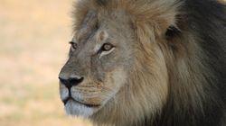 Θυμάστε την οργή για τον κυνηγό που έγδαρε και αποκεφάλισε τον Cecil; Τώρα σκότωσαν και τον γιο