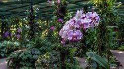 Στον Εθνικό Κήπο Ορχιδέων, στη Σιγκαπούρη 200 VIP υβρίδια ορχιδέας φέρουν ονόματα