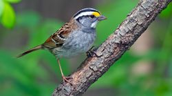 Billions Of Birds Have Disappeared From North America In Recent Decades: