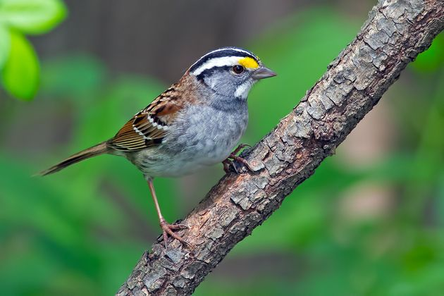 Many varieties of sparrows were among the species of birds that saw the most losses over the past 48