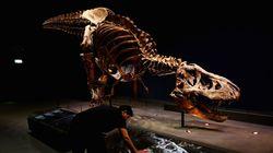 Έρευνα: Ο Τυραννόσαυρος Ρεξ δεν μπορούσε