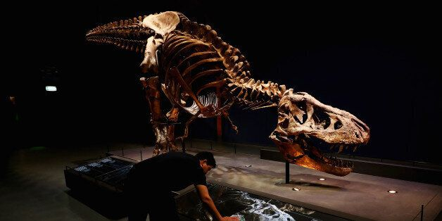 LEIDEN, NETHERLANDS - OCTOBER 17: A general view of the skull, jaw, tail, rib cage and teeth of Trix...