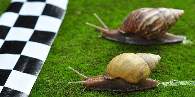 Two snails move towards finishing
