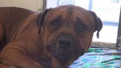 Σκύλος δεν μπορεί να σταματήσει να κλαίει όταν τα αφεντικά του τον έχουν πια