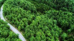 Παρατείνεται έως τις 7 Σεπτεμβρίου 2017 η ανάρτηση των δασικών