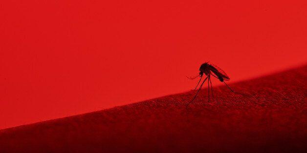 Στην Αργολίδα το πρώτο επιβεβαιωμένο κρούσμα από τον ιό του Δυτικού