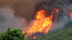 Σε εξέλιξη η μάχη με τις φλόγες στη Νέα Σάντα