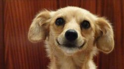 Η απίστευτη περιπέτεια ενός αδέσποτου σκύλου από την Ελλάδα που αναζητούσε μια καλύτερη ζωή στον