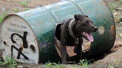 Μπορείτε κι εσείς να βοηθήσετε να σωθούν τα «βαρελόσκυλα» της