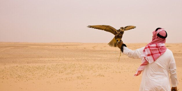An unidentifiable man in traditional Saudi clothing holds a hunting falcon in the Saudi