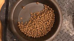 Ο λόγος που αυτός ο σκύλος τρώει μόνο το μισό από το φαγητό του, ίσως σας κάνει να κλάψετε σαν