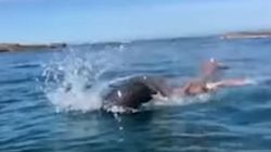 Μονομαχία στον ωκεανό: Άγρια μάχη ανάμεσα σε χταπόδι- γίγαντα και φώκια 120