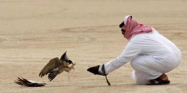 A falcon flies towards a falconer's hand during the Qatar International Falcon and Hunting festival in...