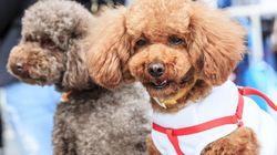 Τον νόμο του ενός σκύλου επιβάλει τώρα κινεζική