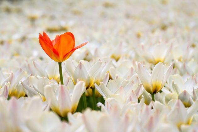 SMAP「世界に一つだけの花」が歴代シングルロングセラーで1位に 中島みゆきさんの記録を約13年ぶりに更新