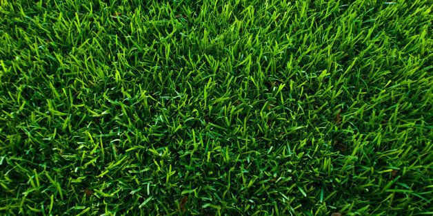 Green bermuda grass in the