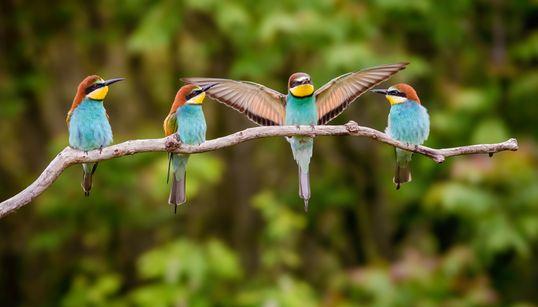Οι πληθυσμοί των πτηνών στις ΗΠΑ και τον Καναδά μειώθηκαν κατά 3 δις σε 50