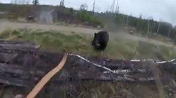 Bίντεο: Εφιαλτική μάχη σώμα με σώμα μεταξύ μεγαλόσωμης αρκούδας και