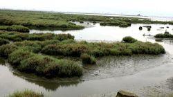 Υπερχείλισε ο Γαλλικός ποταμός στην περιοχή της