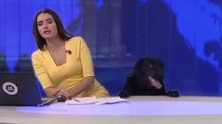Βίντεο: Σκύλος διακόπτει δελτίο