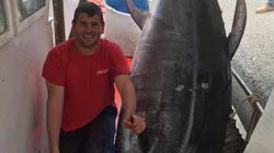 Τόνος 350 κιλών ψαρεύτηκε στην