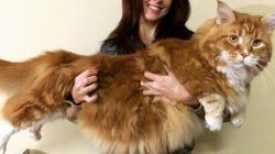 Ομάρ: Αυστραλός ο πιο μεγάλος γάτος στον