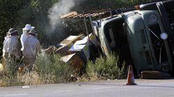 Ανατροπή φορτηγού με μελίσσια στην