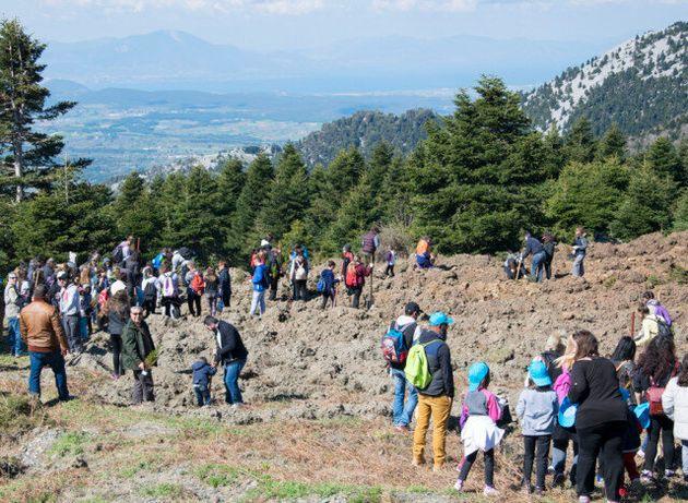 1,2... 1400 δέντρα μέσα σε λίγες