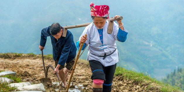 Rice farmer couple ploughing his field on in LongSheng mountains in
