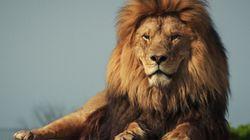 Βίντεο: Λιοντάρι σε τσίρκο άρπαξε τον θηριοδαμαστή από τον λαιμό και τον περιέφερε ενώπιον των