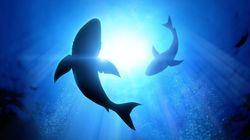 Επίθεση καρχαρία εναντίον γυναίκας σε νησί του Ατλαντικού: Τον έδιωξε ο άνδρας της με